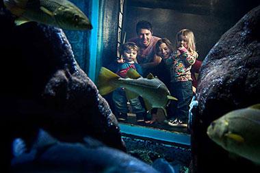 Akvarie i Havets Hus.